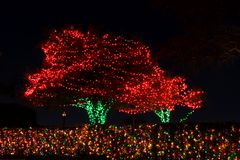 Outdoor Christmas Tree Lights Stock Images