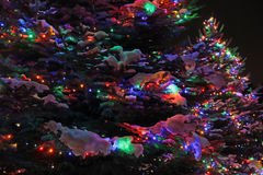 Outdoor Christmas Trees Lit at Night Royalty Free Stock Photo