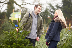 Outdoor Couple Choosing Christmas Tree Together Royalty Free Stock Image
