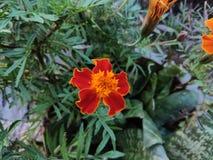 Outdoor Daisy flower stock photos