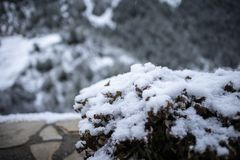 Outdoor decoration plants garden covered by snow. On a winter landscape detail scene royalty free stock images