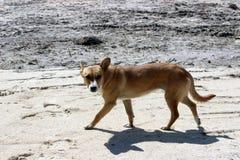 Outdoor dog. Running around the field Lviv Stock Photo