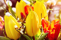 Outdoor easter bouquet of flowers Stock Photography