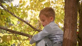 The child climbed a tree. He plays with berries and yellow leaves. Bright autumn Sunny day. Outdoor entertainment stock video footage
