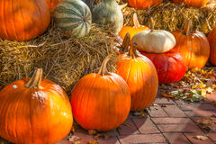 Outdoor Fall Decoration of Pumpkins Stock Image