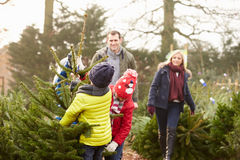 Outdoor Family Choosing Christmas Tree Together Stock Photography