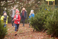 Outdoor Family Choosing Christmas Tree Together. Having Fun royalty free stock images