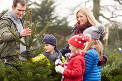 Outdoor Family Choosing Christmas Tree Together Royalty Free Stock Photos