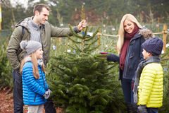 Outdoor Family Choosing Christmas Tree Together. Smiling At Each Other stock photography