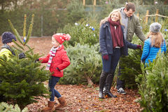 Outdoor Family Choosing Christmas Tree Together Stock Photos