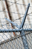 Outdoor Fence Detail of Sharp Barbwire Installation. Security and Protection Concept royalty free stock image