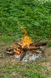 Outdoor fire in the spring forest Stock Photo