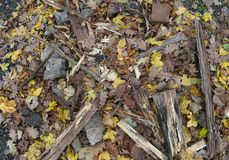 Outdoor fireplace with dry wood and fallen leaves.  Stock Photography