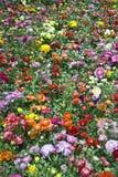 Outdoor flower garden Royalty Free Stock Photos