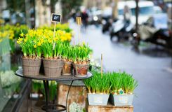 Outdoor flower market Stock Photography