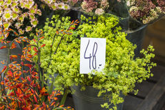 Outdoor flower market in Copenhagen, Denmark. Stock Photography