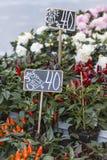 Outdoor flower market in Copenhagen, Denmark. Royalty Free Stock Photography
