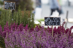 Outdoor flower market in Copenhagen, Denmark. Stock Images
