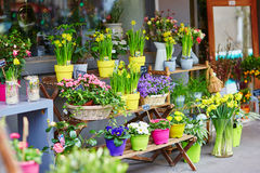 Outdoor flower market on a Parisian street Stock Images