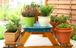 Outdoor flower pots Stock Photos