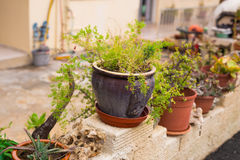 Outdoor flower pots for small garden, patio or terrace Stock Image