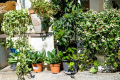 Outdoor flower pots with tropical succulent plants. Royalty Free Stock Photography