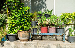 Outdoor flower pots with tropical succulent plants. Stock Photos