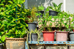 Outdoor flower pots with tropical succulent plants. Royalty Free Stock Image