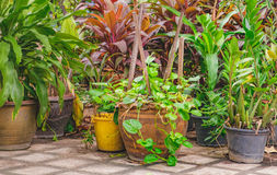 Outdoor flower pots with tropical succulent plants. Stock Photo