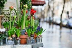 Outdoor flower shop stock photos