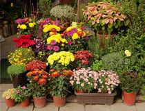 Outdoor Flower Shop Royalty Free Stock Image