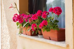 Outdoor flowers on a window sill royalty free stock images