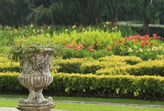 Outdoor garden and the flowerpot in the rain Royalty Free Stock Image