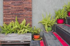Green leaves in flowerpot decorate on wooden stairs outside of building. Outdoor Gardening Design Concept : Green leaves in flowerpot decorate on wooden stairs royalty free stock image