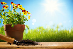 Outdoor gardening tools and flowers Royalty Free Stock Photos