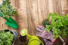 Outdoor gardening tools and herbs royalty free stock photos