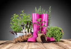 Outdoor gardening tools and herbs Royalty Free Stock Images