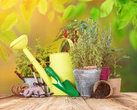 Outdoor gardening tools and herbs. Close-up stock photo