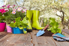 Outdoor gardening tools. On old wood table Stock Photo