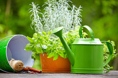 Outdoor gardening tools Stock Photo