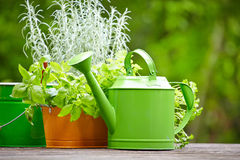 Outdoor gardening tools Royalty Free Stock Photos