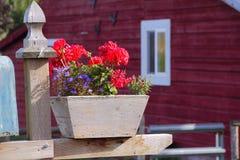 Outdoor Geranium Planter Royalty Free Stock Image