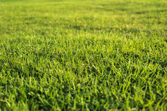 Outdoor grass nature. And sun rise Stock Photography