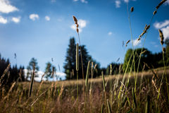 Outdoor grass sun stock images