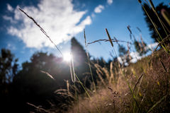 Outdoor grass and sun sky clouds Royalty Free Stock Images
