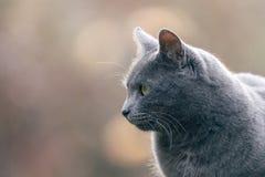Outdoor gray cat photo. Outdoor gray cat natural photo royalty free stock photos