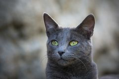 Outdoor gray cat photo stock photography