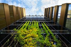 Outdoor green living wall, vertical garden on modern office building stock images