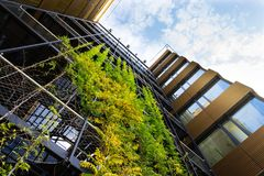 Outdoor green living wall, vertical garden on modern office building. Sprawling plants on outdoor green living wall, vertical garden on modern office building Royalty Free Stock Images
