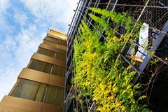 Outdoor green living wall, vertical garden on modern office building. Sprawling plants on outdoor green living wall, vertical garden on modern office building royalty free stock photography